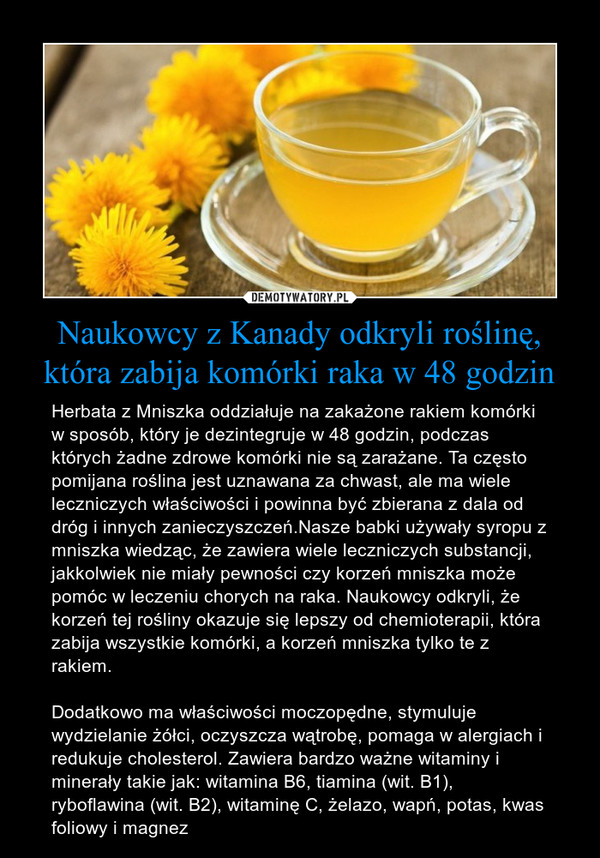 herbatazmniszkalearskiego