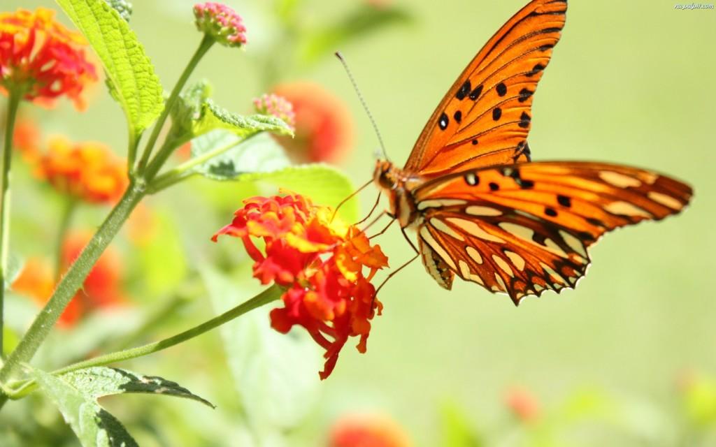 pomaranczowykwiat